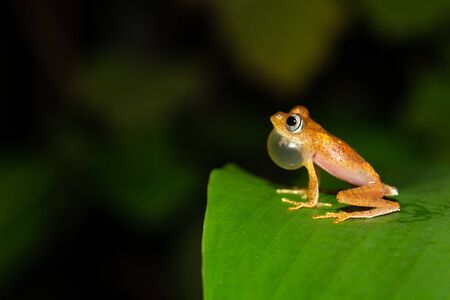 The small orange frog is sitting on a leaf Stock Photo