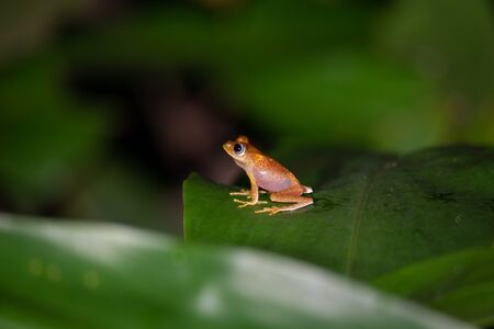 The small orange frog is sitting on a leaf