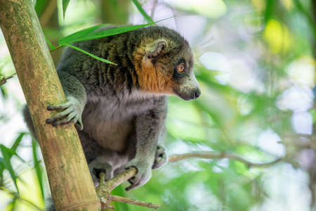A lemur sits on a branch and watches the visitors to the national park.