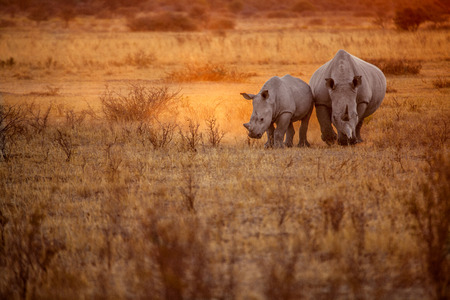 Mother and child rhino