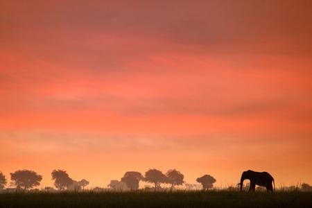 Elephant sunset photo