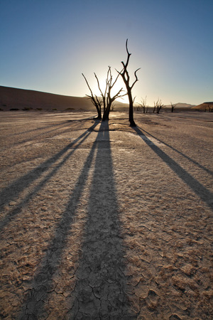 shaddow: deadvlei tree
