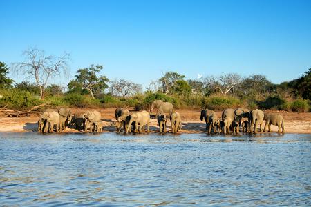 elephant herd photo