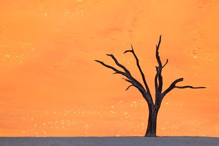 shaddow: deadvlei tree