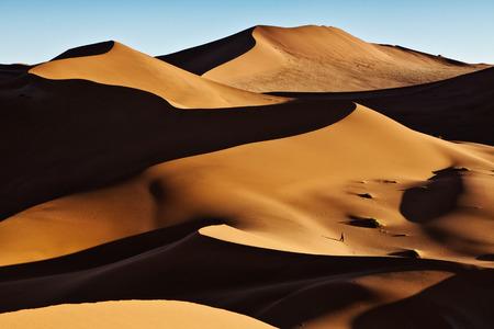 sunset tree: Sand dunes at dusk