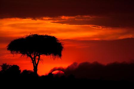 shaddow: sunset