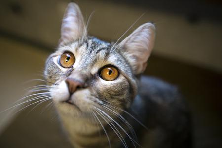 tight focus: cat