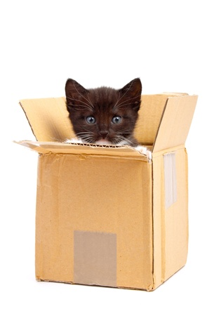 gato jugando: gatito aislada sobre fondo blanco Foto de archivo