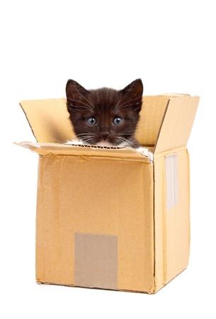 colour box: kitten isolated on white background Stock Photo