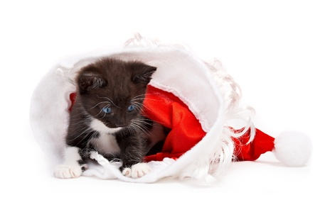 kitten isolated on white background photo