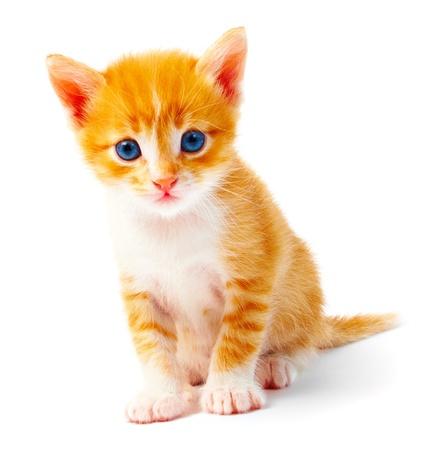 Kitten geïsoleerd op witte achtergrond Stockfoto