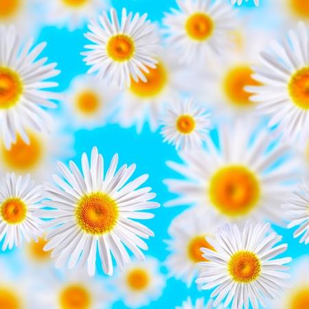 lovely chamomiles (seamless  texture) photo