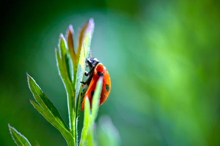 red ladybug on green background photo