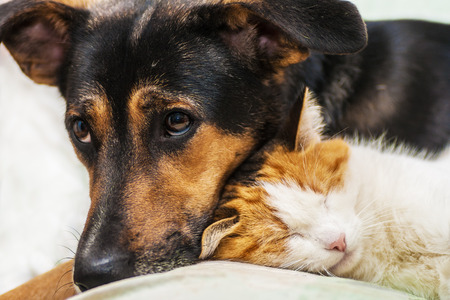 Katze und Hund ist beste Freunde Standard-Bild - 41997554