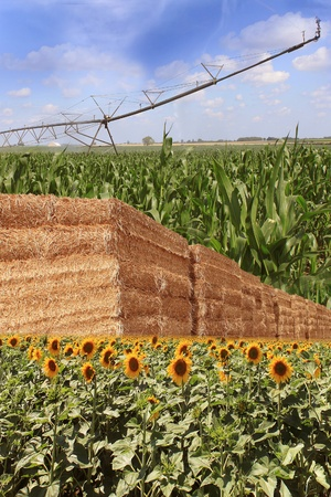 layout for organic farming with an irrigation system, bundles of straw, sunflower and corn field Stock Photo - 14421170