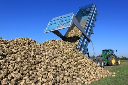 outputs: a farmer in a sugar beet field