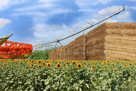 layout for an organic straw bales, combine, sunflowers and corn field Stock Photo - 14421511