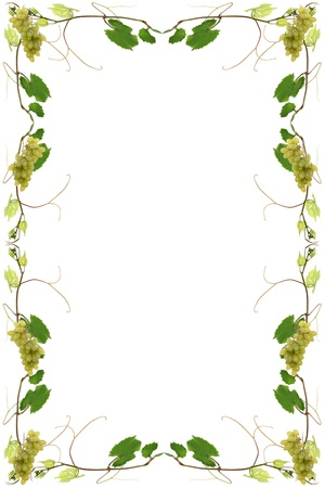 vineleaves with bunches of grapes for a wine list photo