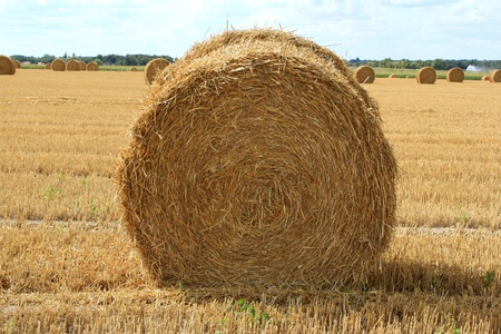 a haystack in a field of culture photo