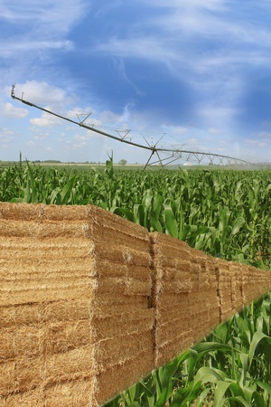 layout for agriculture bales of straw on a field of corn with an automatic watering Stock Photo - 14927915