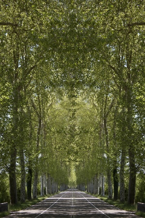 convey: a right road bordered of trees