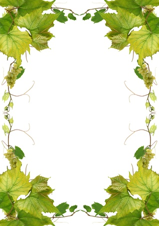vine leaves and grapes for wine in a fast food Stock Photo