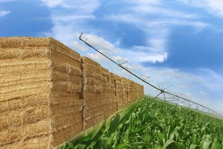 layout of bales of straw, and combine corn field with a signed purchase agreement by a commercial Stock Photo - 15481775