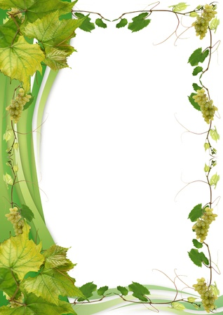 vine and leaves of vine: vine leaves and grapes for wine in a restaurant