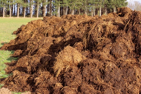 spreading a bunch of farm manure for organic agriculture Stock Photo