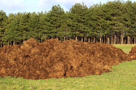 manure: spreading a bunch of farm manure for organic agriculture Stock Photo