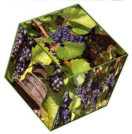 Fruits, grapes and vines on a cube photo