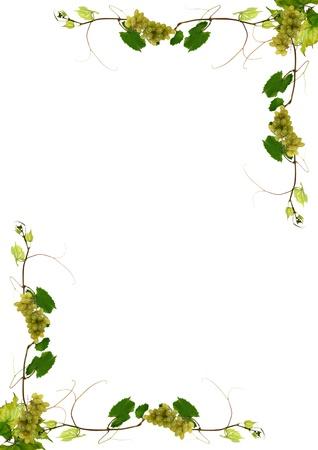 wijnbladeren: wijnbladeren en druiven voor wijn in een restaurant
