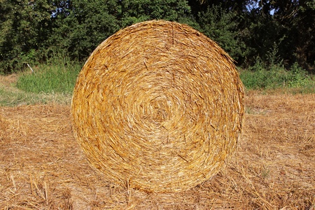 a stack of straw in a field of growing wheat crop Stock Photo