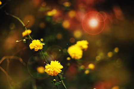 defocus: Spring flowers background and nature texture yellow and green Stock Photo