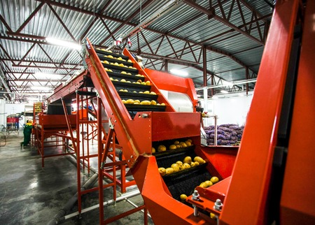 Potato sorting, processing and packing factory vegetable with big machine