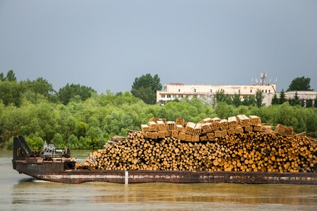transported: Many wooden logs transported on barge boat on the river Stock Photo