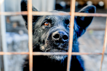 forceful: Big black dog behind the fence, prisonar, reguire freedom Stock Photo