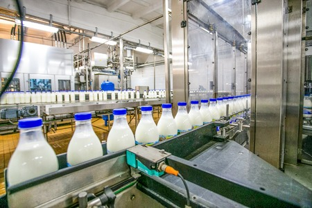 Milk production at factory. White bottles with blue tops going through conveyer line with another line and stainless steel background inside of factory