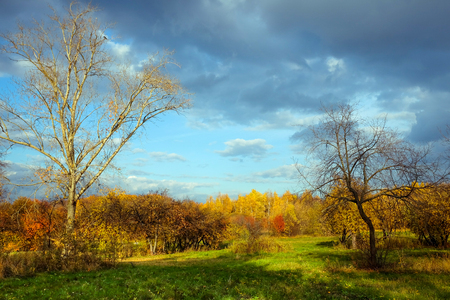 yellow trees: Autumn landscape with green grass, yellow trees and blue sky