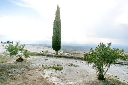 stoneage: Fir tree and bushes on the top of the hill with limestone floor and whte-blue cloudy sky