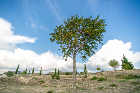 stoneage: Lonely tree and fir trees  in limestone ground with beautiful white clouds on blue sky