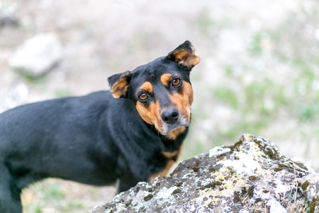 occhi tristi: black-brown lonely dog looking above with sad eyes