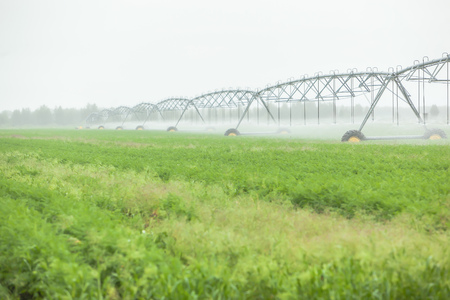 wetting: Blurred green field landscape with automatical irrigation process Stock Photo