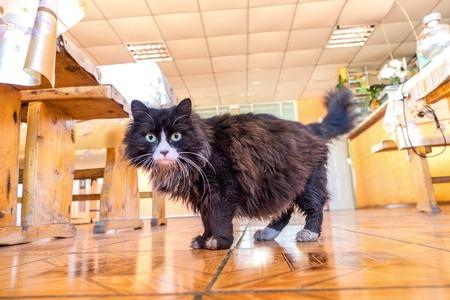 blackwhite: Black-white cat looking at camera