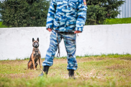 wrestle: Military german shepherd and officer at training