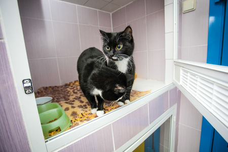 animal shelter: Black and white cats in an animal shelter, waiting for a home