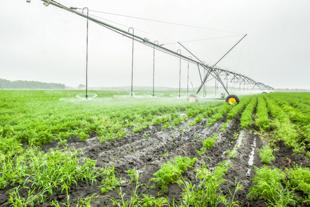irrigation system for a carrot on an industrial farm outside
