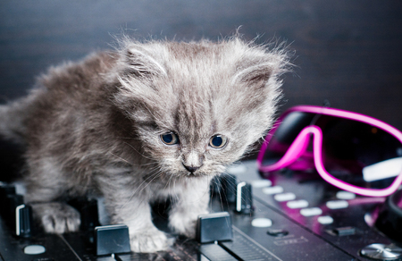 british shorthair: British shorthair kitten on the remote DJ Stock Photo