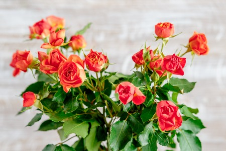 bouquet of red tea roses on wooden background