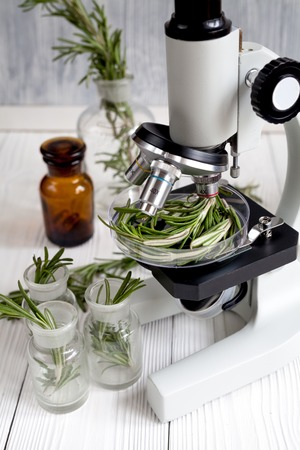 food inspection: concept healthy food inspection rosemary in laboratory no one close up Stock Photo
